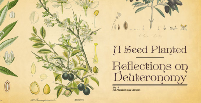 A Seed Planted: Reflections on Deuteronomy